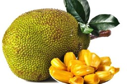 Picture of JACK FRUIT