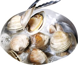 Picture of CLAM [35-45PCS/KG]