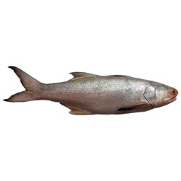 Picture of LAKKA [1KG+]